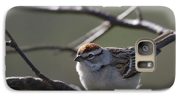 Galaxy Case featuring the photograph Backlit Chipping Sparrow by Susan Capuano