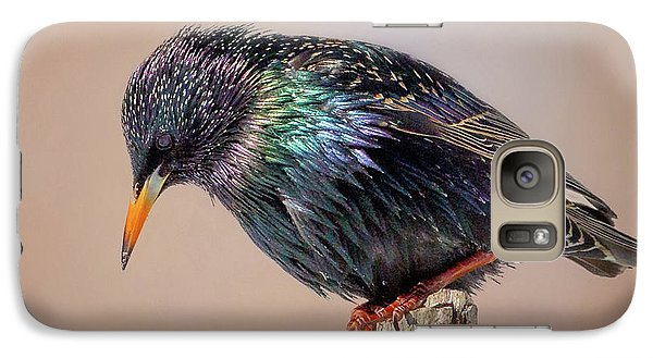 Backyard Birds European Starling Square Galaxy S7 Case by Bill Wakeley