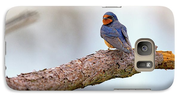 Barn Swallow On Assateague Island Galaxy S7 Case