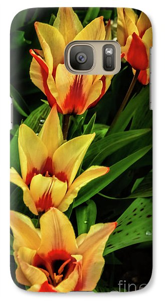 Galaxy Case featuring the photograph Beautiful Bicolor Tulips by Robert Bales