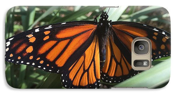 Galaxy Case featuring the photograph Beautiful Fall Butterfly  by Paula Brown