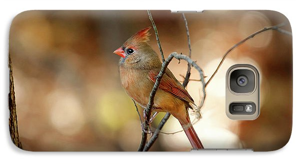 Galaxy Case featuring the photograph Beautiful Female Cardinal by Darren Fisher