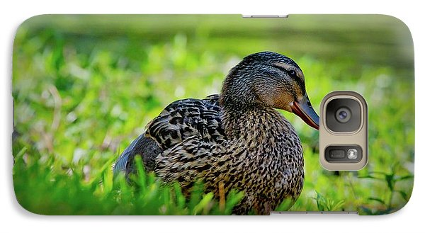 Galaxy Case featuring the photograph Beautiful Mama Duck by Linda Unger