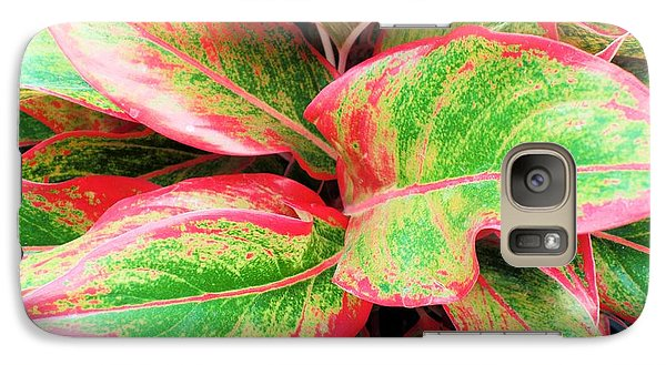 Galaxy Case featuring the photograph Beautiful Red Aglaonema by Ray Shrewsberry
