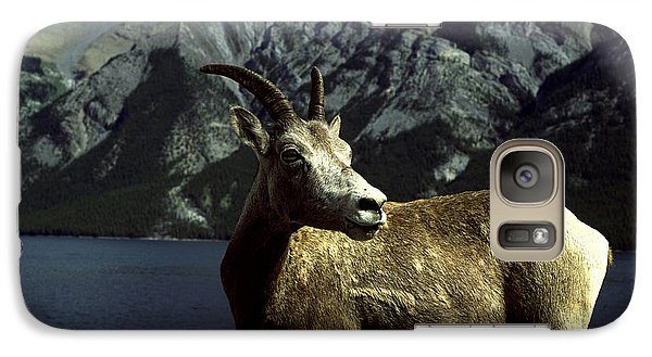 Galaxy Case featuring the photograph Bighorn Sheep by Sally Weigand