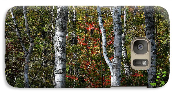 Galaxy Case featuring the photograph Birches by Elena Elisseeva