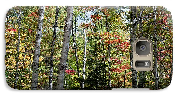 Galaxy Case featuring the photograph Birches In Fall Forest by Elena Elisseeva