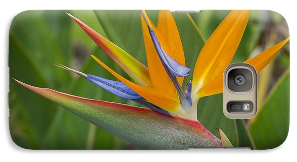 Galaxy Case featuring the photograph Bird Of Paradise by Christina Lihani