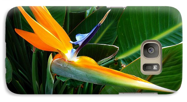 Galaxy Case featuring the photograph Bird Of Paradise by Sue Melvin