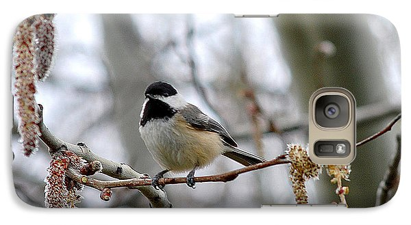Galaxy Case featuring the photograph Black-capped Chickadee 20120321_39a by Tina Hopkins