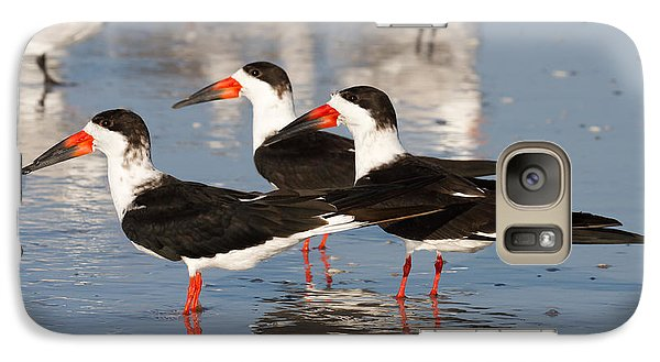 Black Skimmer Birds Galaxy S7 Case