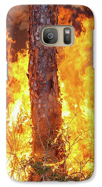 Galaxy Case featuring the photograph Blazing Pine by Arthur Dodd
