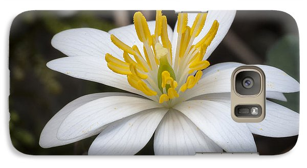 Galaxy Case featuring the photograph Bloodroot by Tyson and Kathy Smith