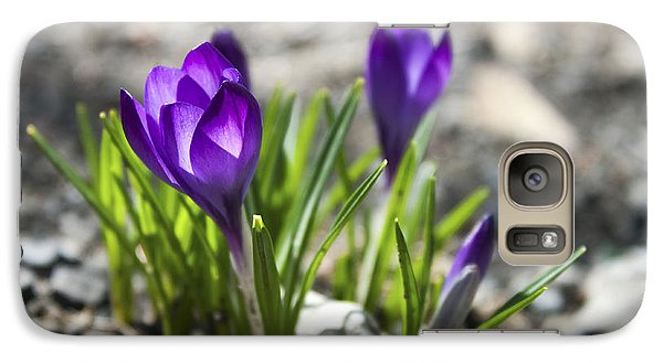 Galaxy Case featuring the photograph Blooming Crocus #1 by Jeff Severson