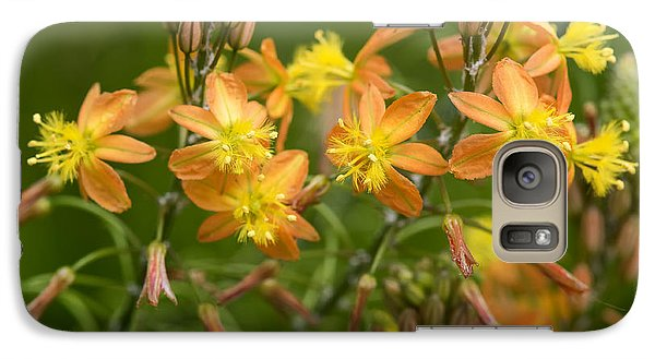 Galaxy Case featuring the photograph Blossoms Of Spring by Stephen Anderson