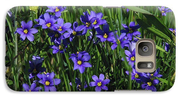 Galaxy Case featuring the photograph Blue Eyed Grass by Robyn Stacey