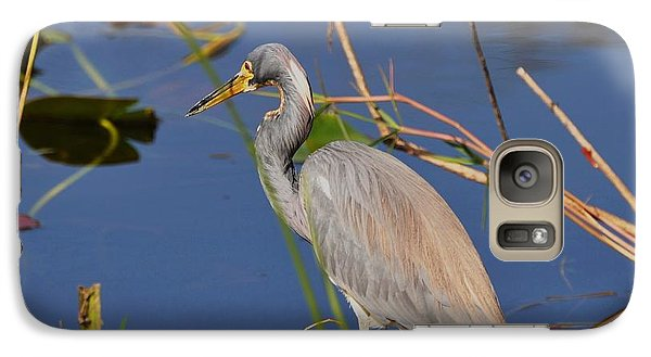 Galaxy Case featuring the photograph Blue Heron by Helen Haw