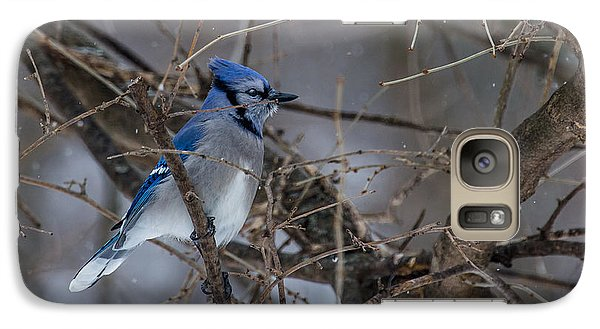 Galaxy Case featuring the photograph Blue Jay by Dan Traun
