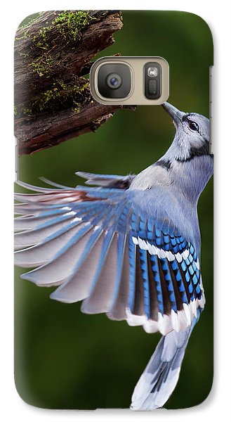 Galaxy Case featuring the photograph Blue Jay In Flight by Mircea Costina Photography