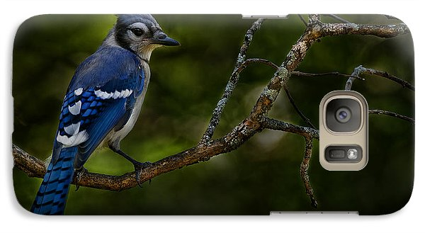 Galaxy Case featuring the photograph Blue Jay In Tree by Michael Cummings