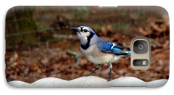 Galaxy Case featuring the photograph Blue Jay Strikes A Pose by Sue Melvin