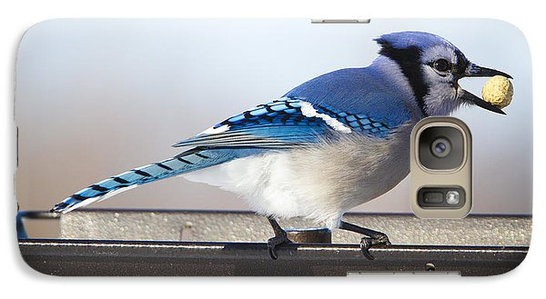 Blue Jay With A Mouth Full Galaxy S7 Case by Ricky L Jones