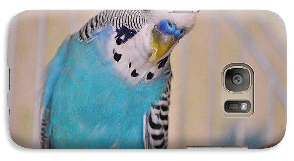 Parakeet Galaxy S7 Case - Blue Parakeet by Jai Johnson