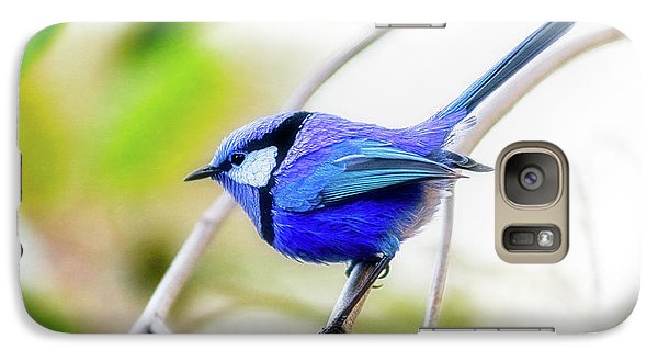 Galaxy Case featuring the photograph Blue Wren, Margaret River by Dave Catley