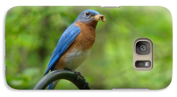 Galaxy Case featuring the photograph Bluebird Catches Worm by Rand Herron