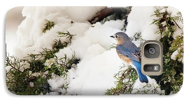 Galaxy Case featuring the photograph Bluebird On Snow-laden Cedar by Robert Frederick