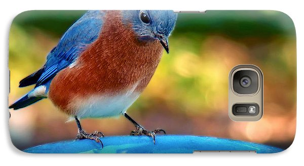 Galaxy Case featuring the photograph Bluebird's Dinner by Sue Melvin