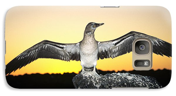 Booby At Sunset Galaxy S7 Case by Dave Fleetham - Printscapes