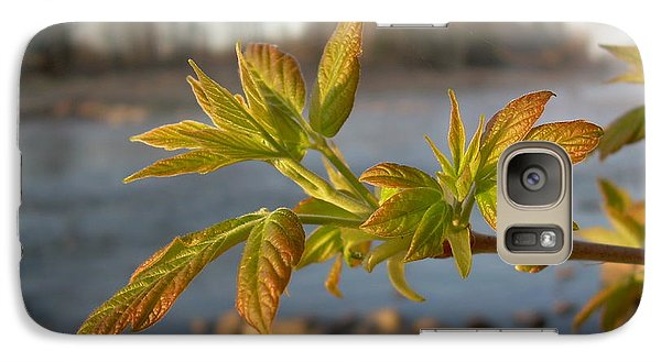 Galaxy Case featuring the photograph Box Elder Leaves In Dawn Light by Kent Lorentzen