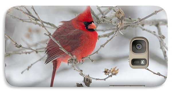 Galaxy Case featuring the photograph Bright Splash Of Red On A Snowy Day by Skip Tribby