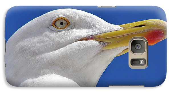 Galaxy Case featuring the photograph British Herring Gull by Terri Waters