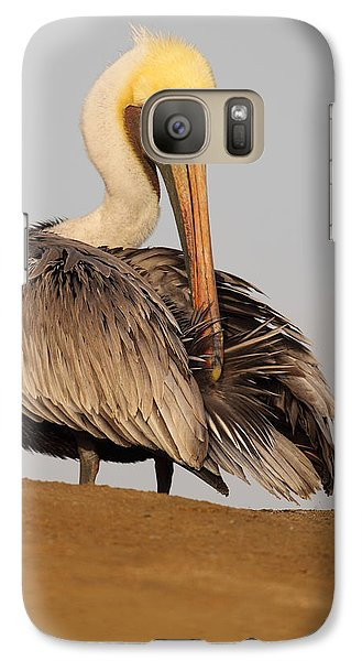 Galaxy Case featuring the photograph Brown Pelican Preening Feathers On Shifting Sands by Max Allen