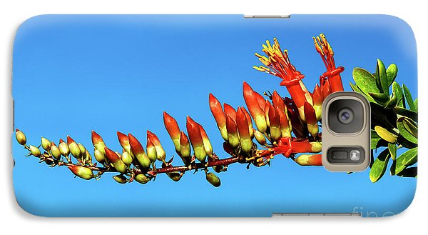 Galaxy Case featuring the photograph Budding Ocotillo by Robert Bales