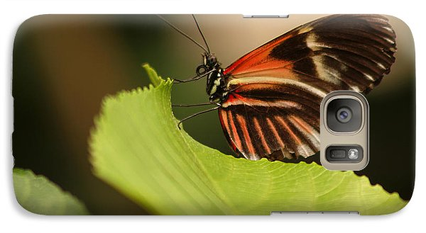 Galaxy Case featuring the photograph Butterfly Curling Edge Of Leaf by Max Allen