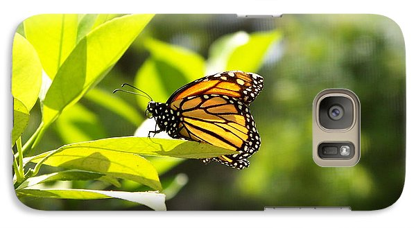 Galaxy Case featuring the photograph Butterfly In Sunlight by Carol  Bradley