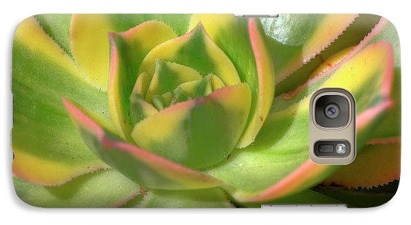 Galaxy Case featuring the photograph Cactus 4 by Jim and Emily Bush