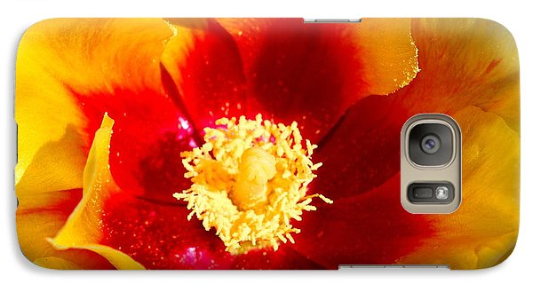 Galaxy Case featuring the photograph Cactus Flower V by M Diane Bonaparte
