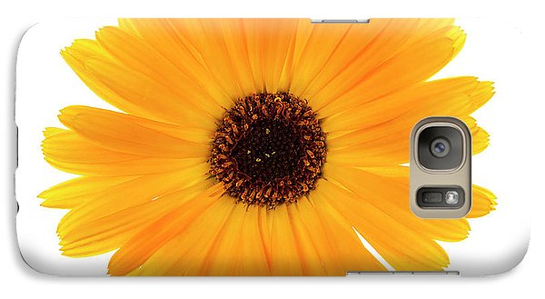 Galaxy Case featuring the photograph Calendula Flower by Elena Elisseeva
