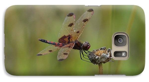 Galaxy Case featuring the photograph Calico Pennant by Randy Bodkins
