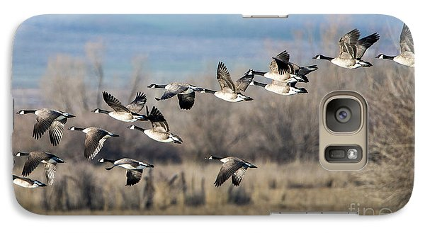 Canada  Geese Flock Galaxy Case by Mike Dawson