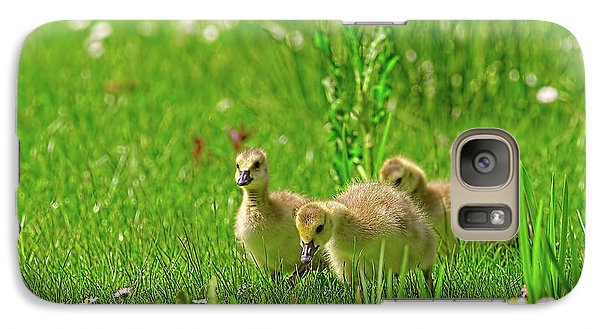 Galaxy Case featuring the photograph Canada Goose Goslings In A Field Of Daisies by Sharon Talson
