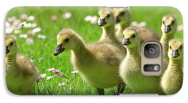 Galaxy Case featuring the photograph Canada Goose Goslings by Sharon Talson