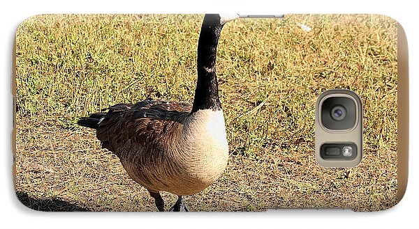 Galaxy Case featuring the photograph Canada Goose On A Stroll by Sheila Brown