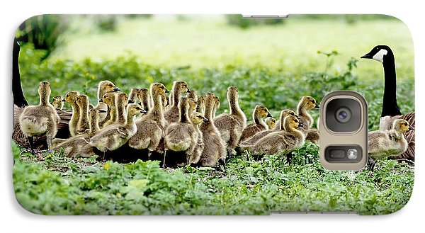 Galaxy Case featuring the photograph Canada Gosling Daycare by Rona Black