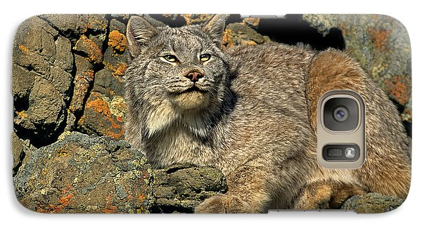 Galaxy Case featuring the photograph Canadian Lynx On Lichen-covered Cliff Endangered Species by Dave Welling