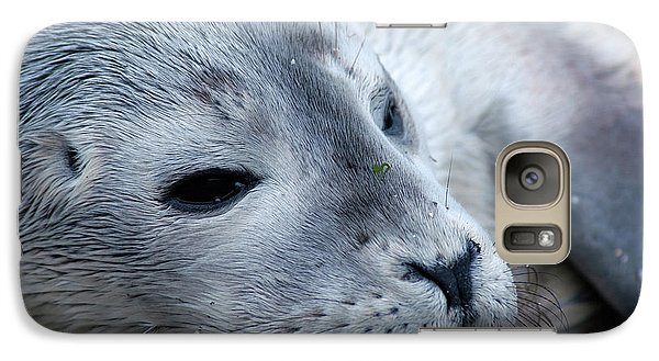 Galaxy Case featuring the photograph Cape Ann Seal by Mike Martin